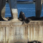 chile valparaiso bay sea lions